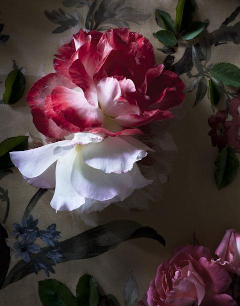 fleurs-.jpg