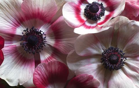 fleurs-2.jpg