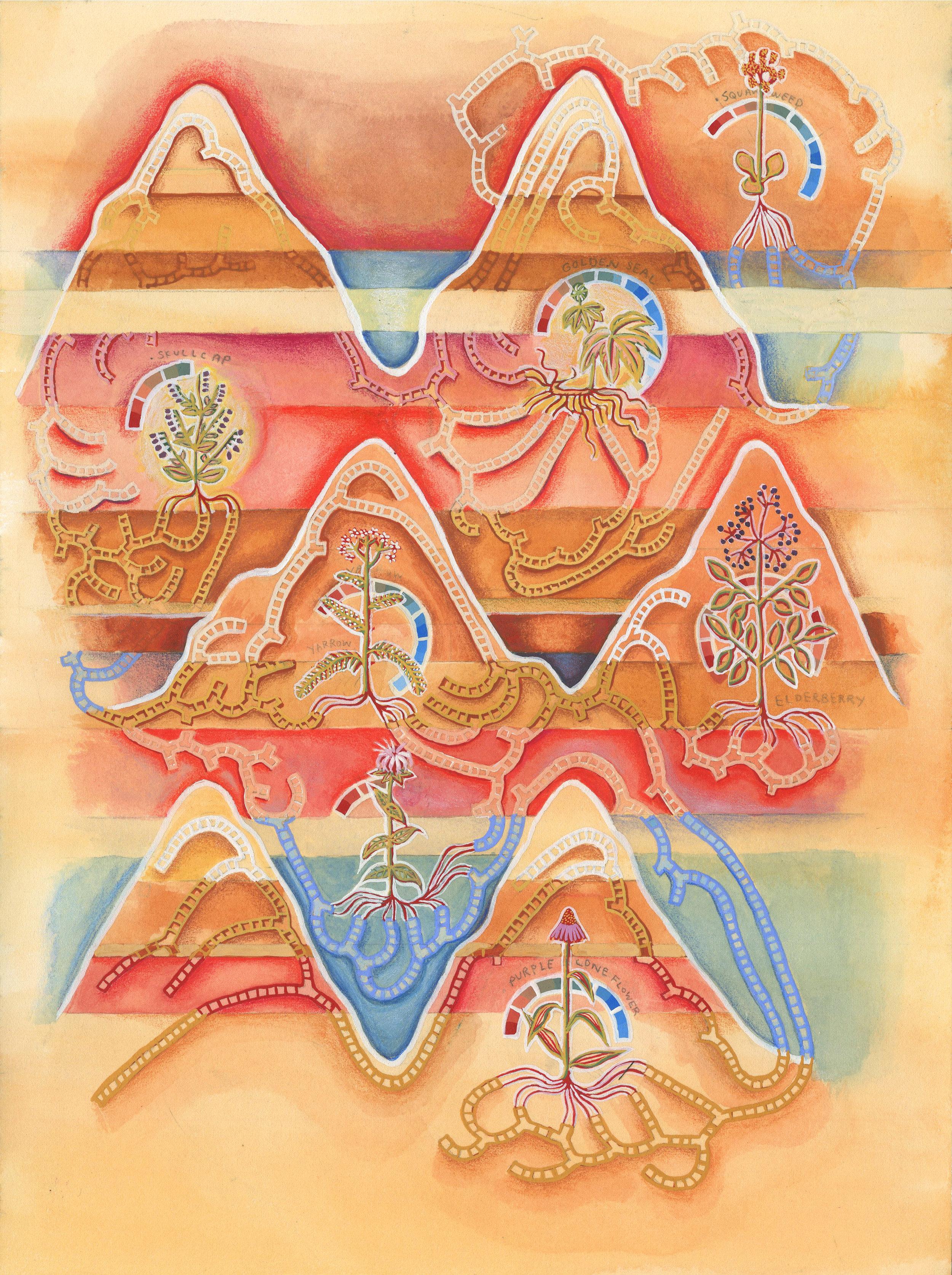 NativeMedicinalHarvestTimeChart.jpg