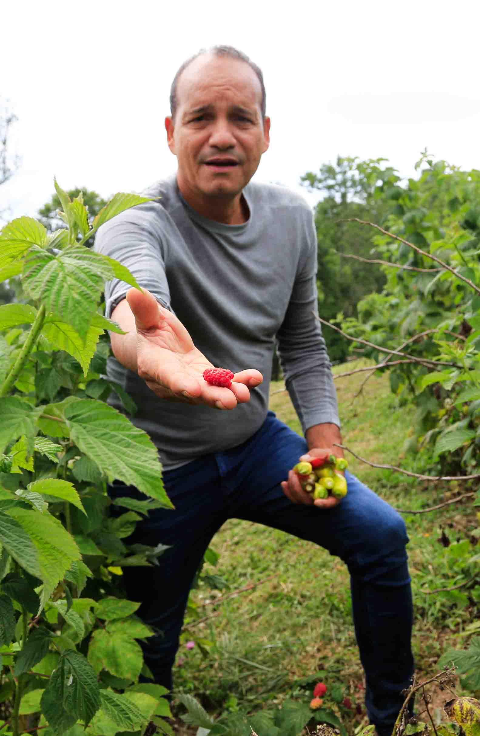 44_sharingraspberries.jpg