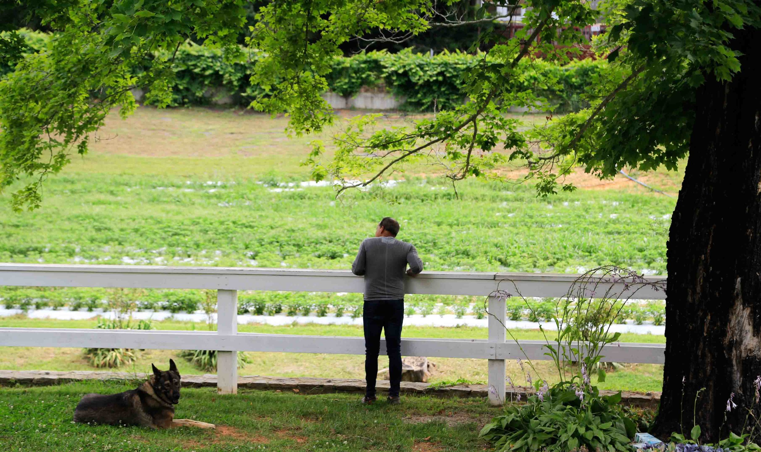 44_surveying front peppers.jpg