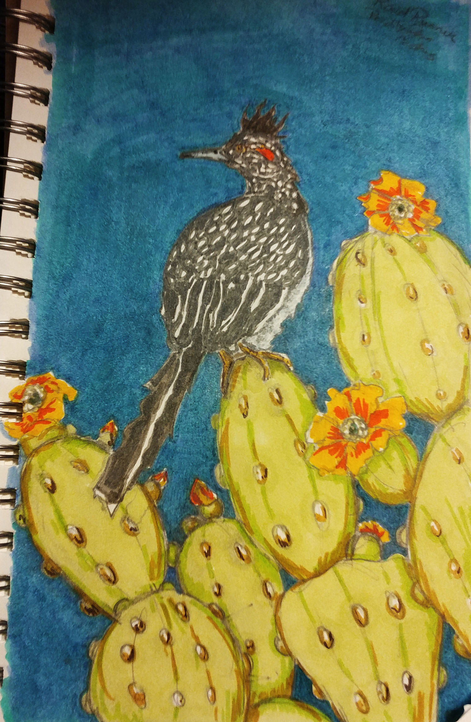 ROADRUNNER AND CACTUS