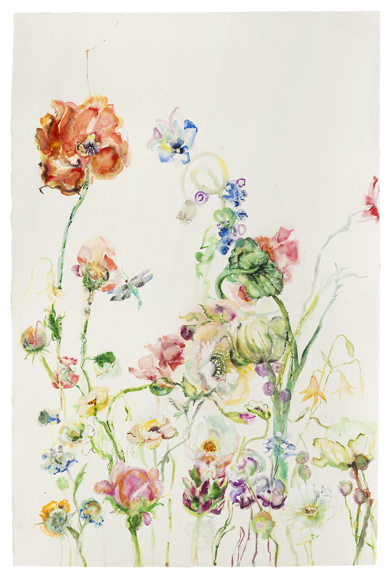 Poppy, 2017, Watercolor on paper, 60 x 40 in.