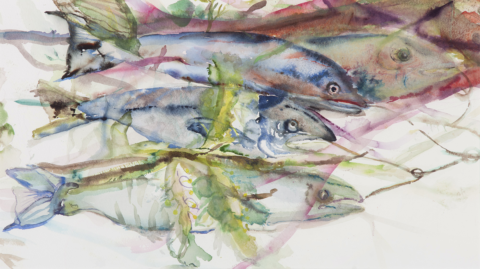 Bluefish, 2014, Watercolor on paper, 30 x 26 in.