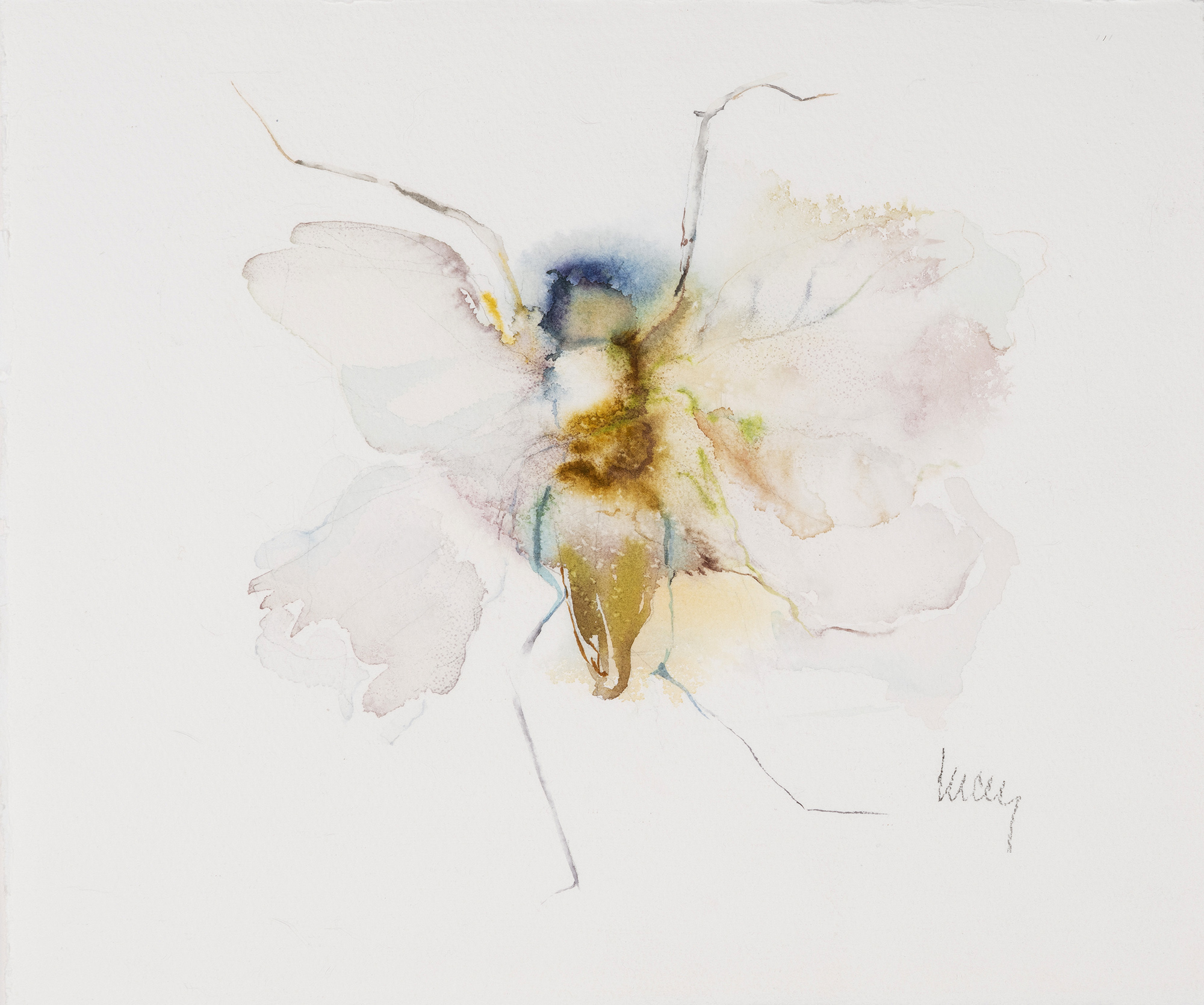 Moth Fluttering, 2012, Watercolor on paper, 11 x 13 in.