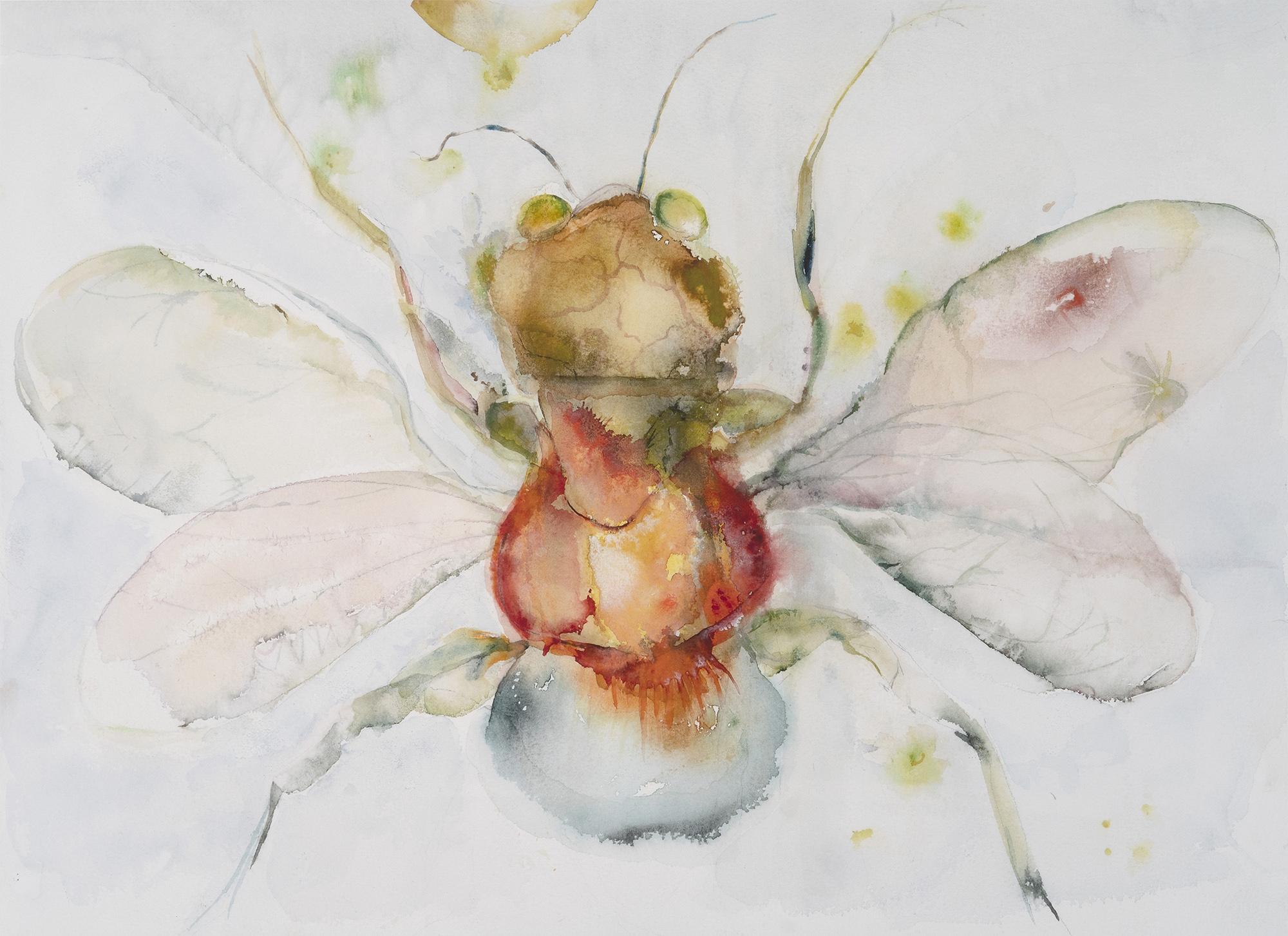 Moth II (Little Bee), 2009, Watercolor on paper, 15 x 17 in.