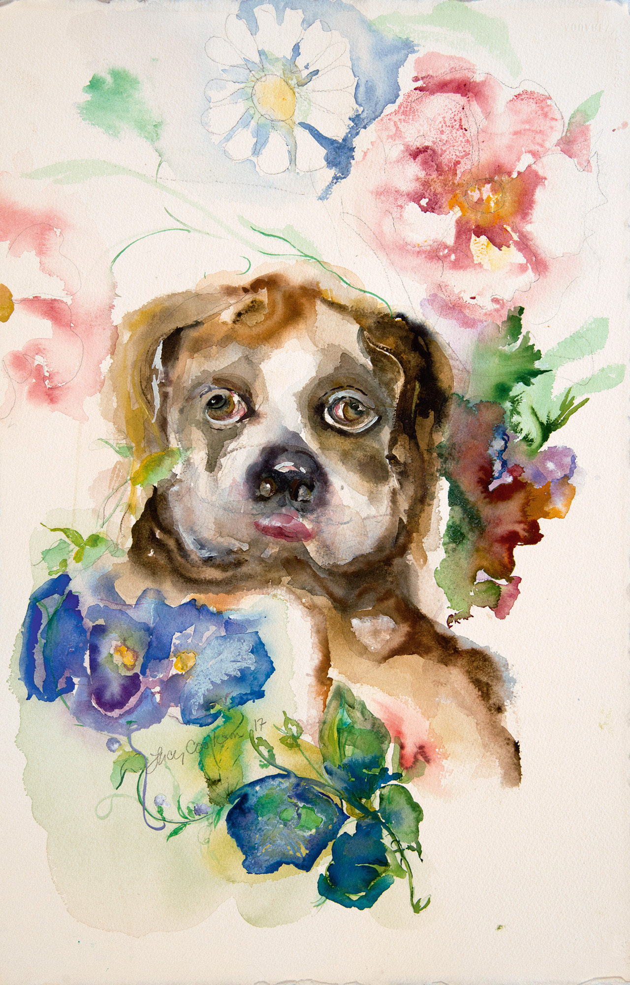 Boxer Dog Hank, 2017, Watercolor on paper, 18 x 12 in.