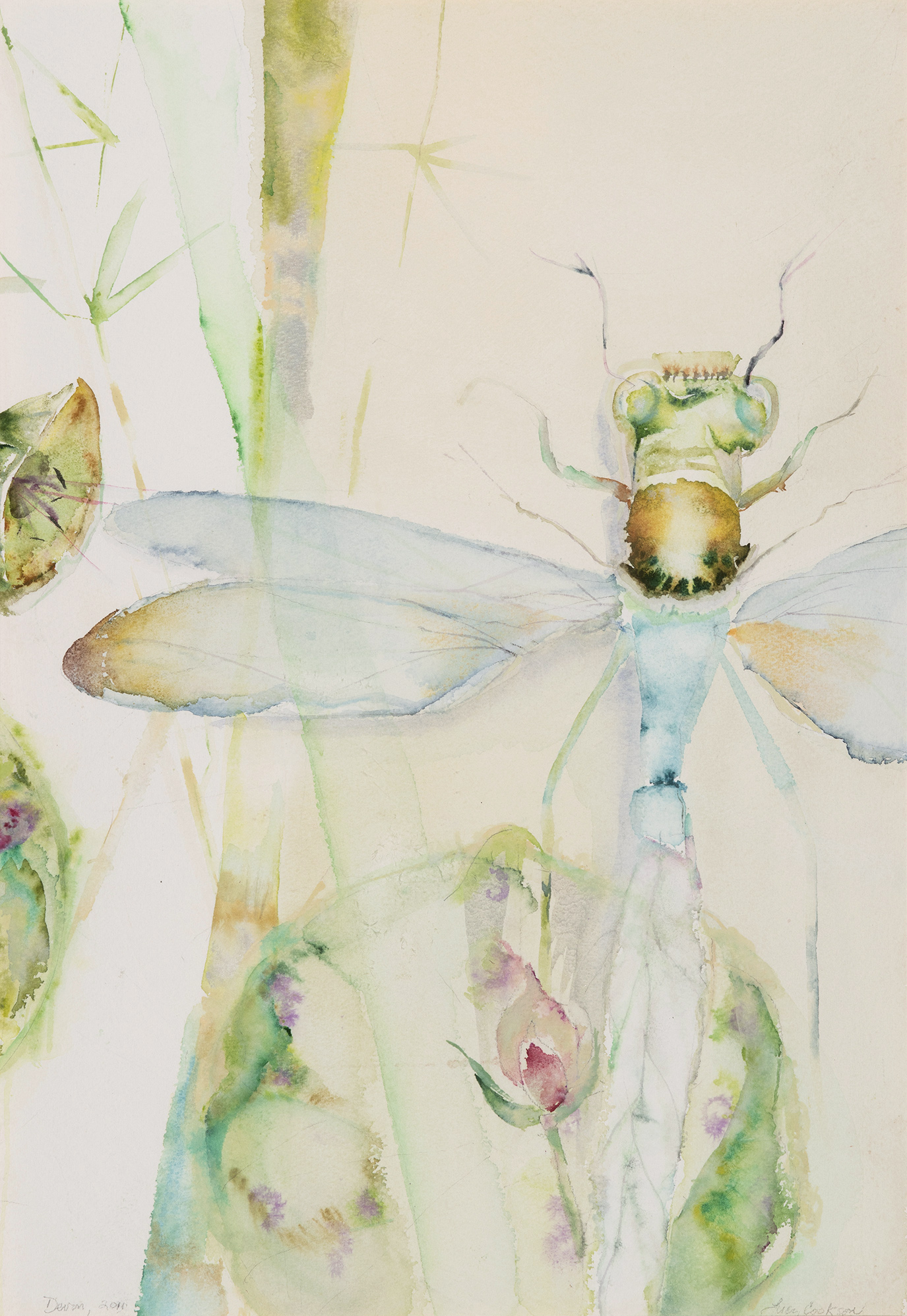Dragonfly over Lotus, 2011, Watercolor on paper, 21.5 x 12 in.