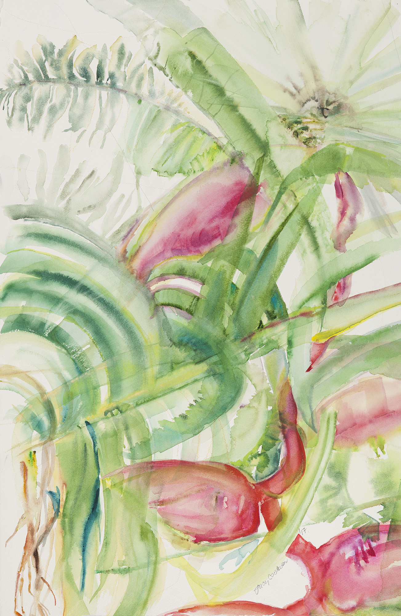 Heliconia, 2017, Watercolor on paper, 38.5 x 28.5 in.