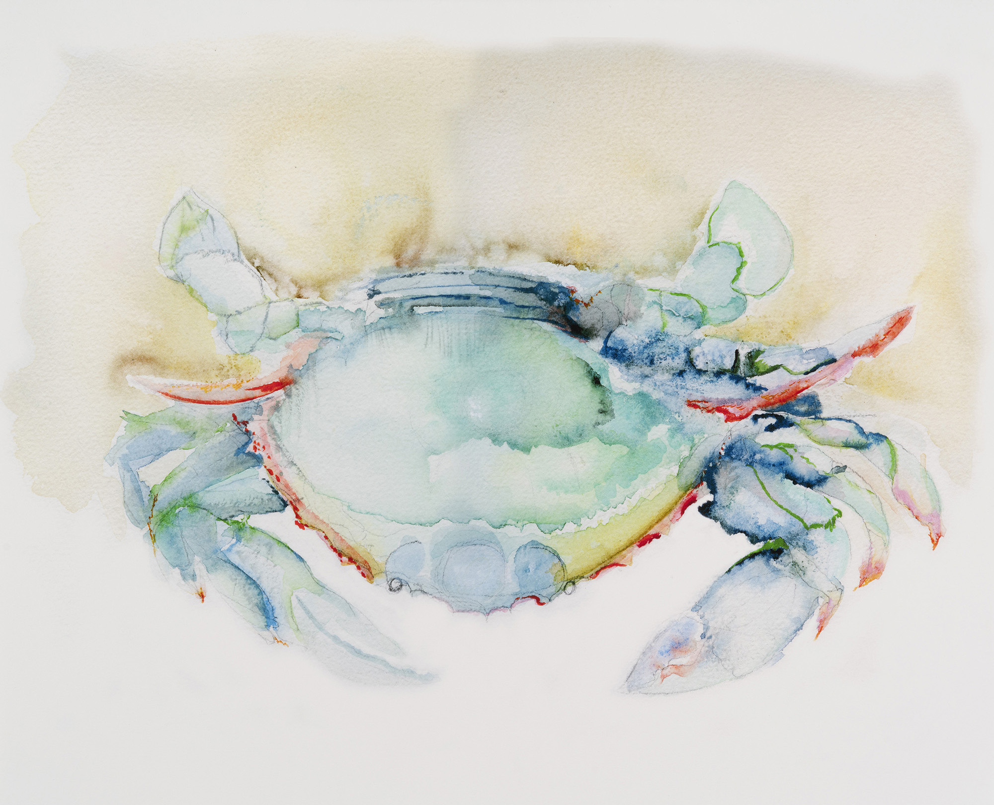 Crab, 2009, Watercolor on paper, 9 x 12 in.