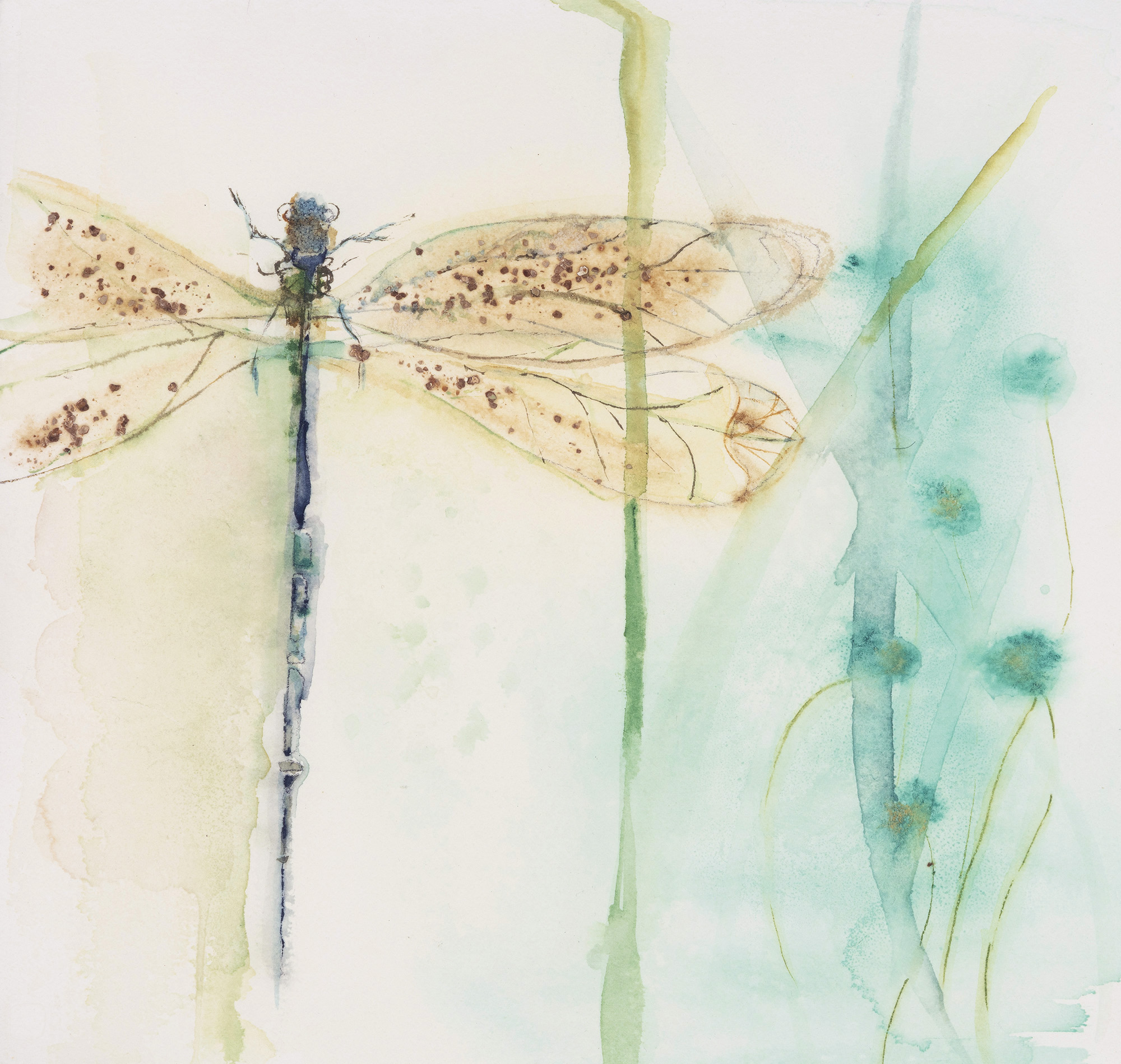 Dragonfly on Aquamarine, 2011, Watercolor on paper, 10.75 x 11 in.