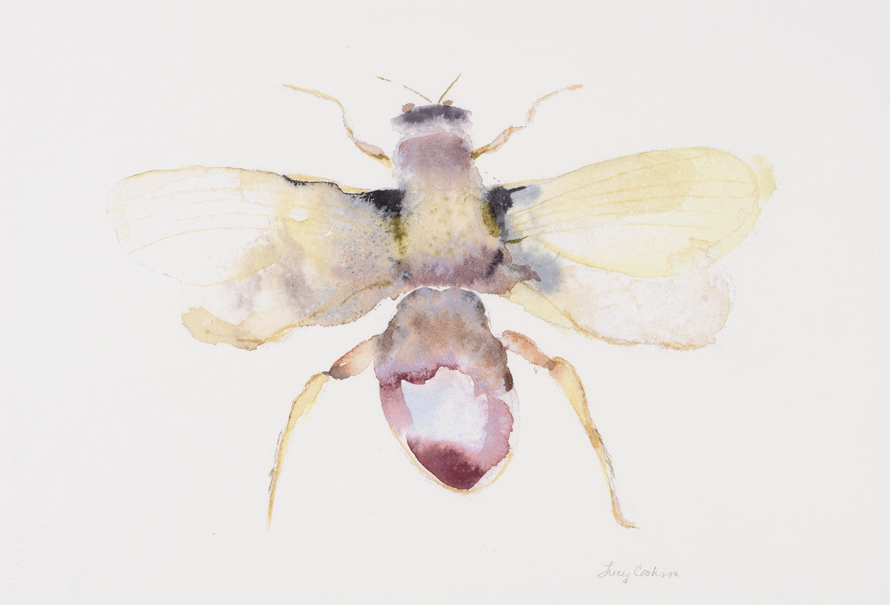 Moth III (Prize), 2009, Watercolor on paper, 11.5 x 14 in.