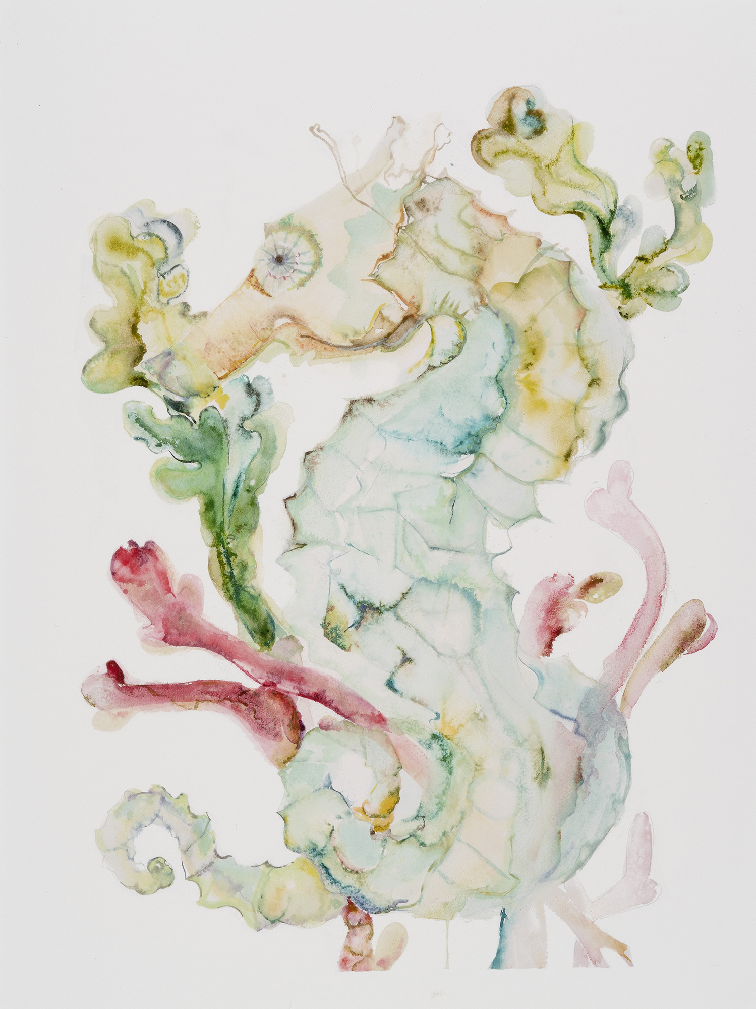 Seahorse II (Hawaii Seahorse), 2014, Watercolor on paper, 24 x 18 in.