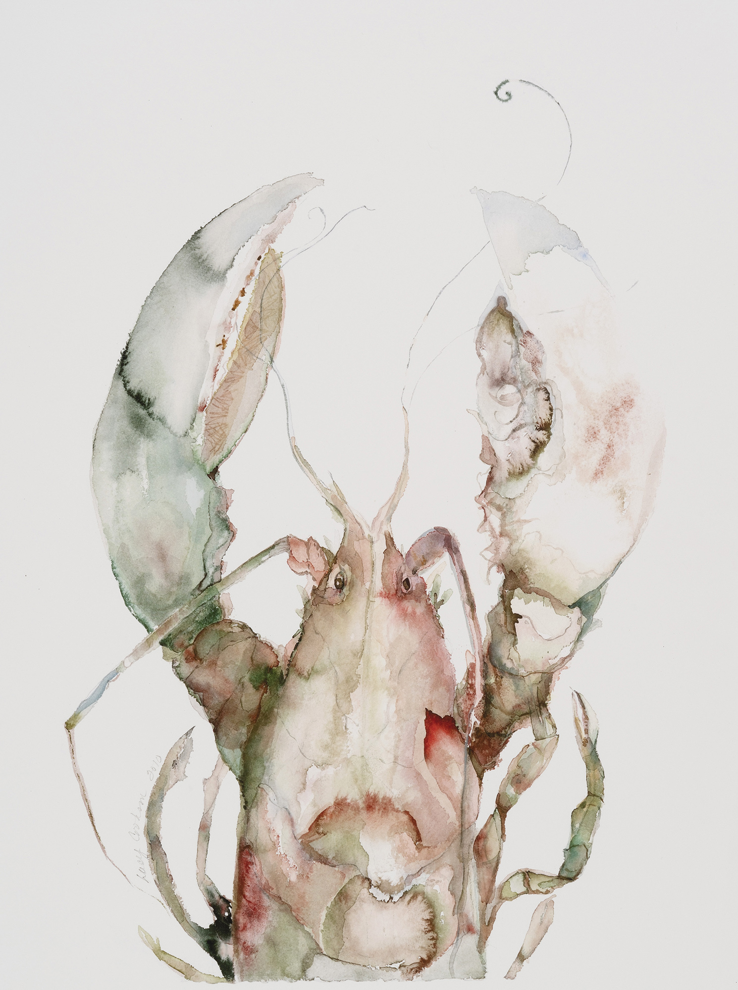 Lobster, 2010, Watercolor on paper, 30 x 26 in.
