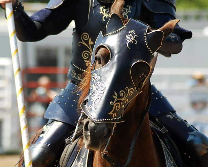 Avcal Equestrian.jpg