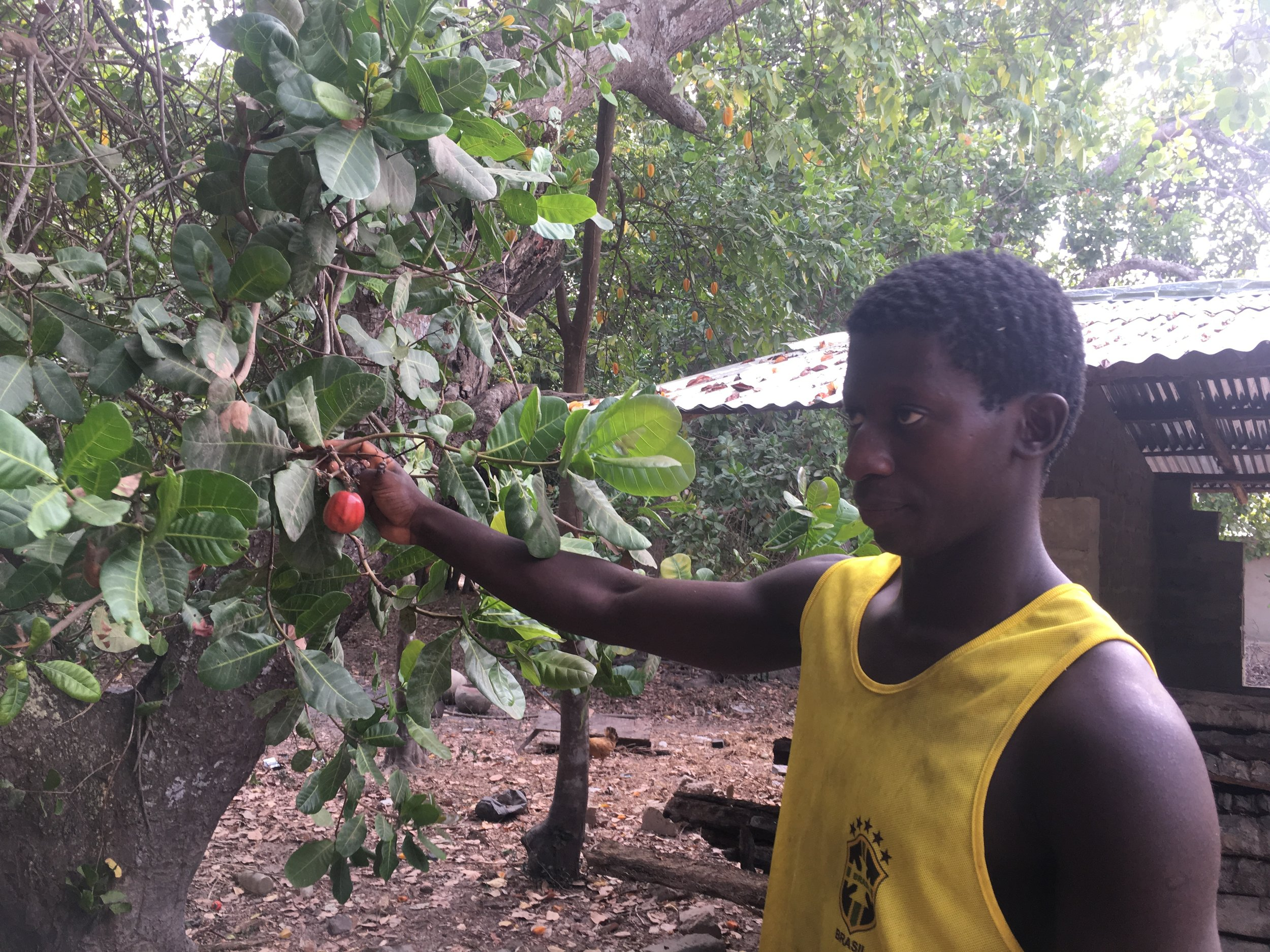 Jean Sebastain takes us on a tour of his family cashew farm.
