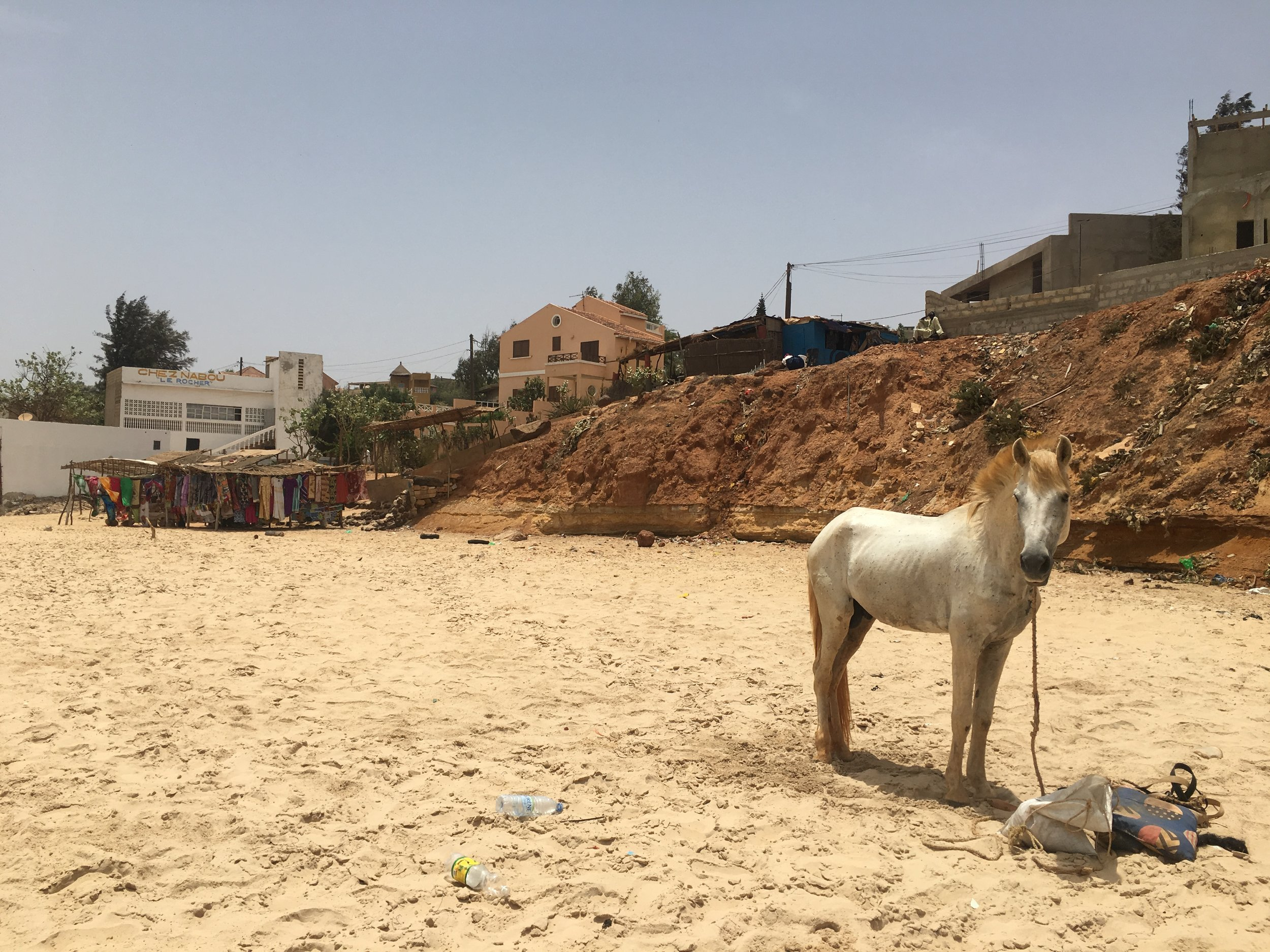 A horse stands on the beach in Toubab Dialaw.