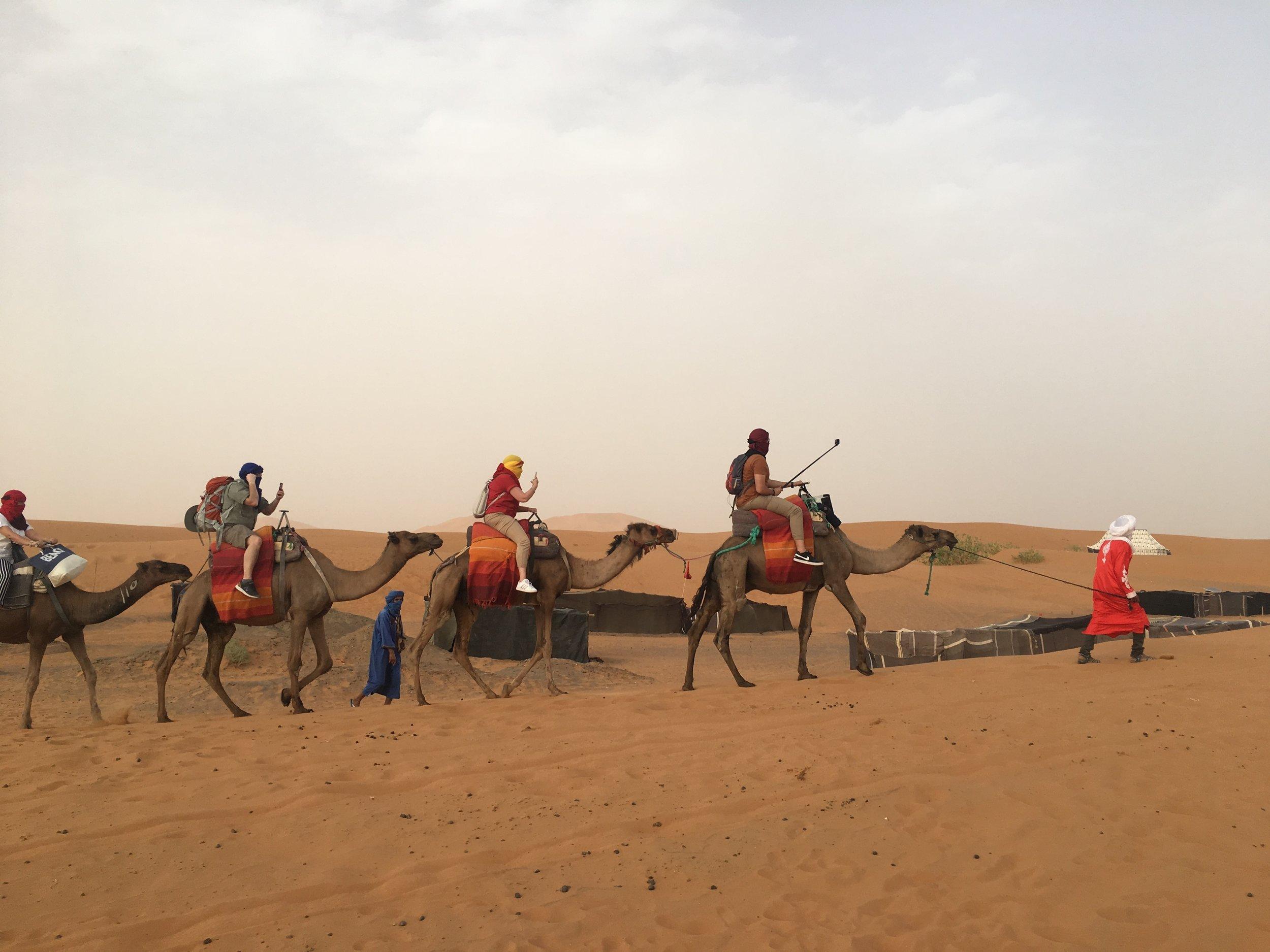 A camel shepherd leads his animals across the Erg Chebbii Dunes.