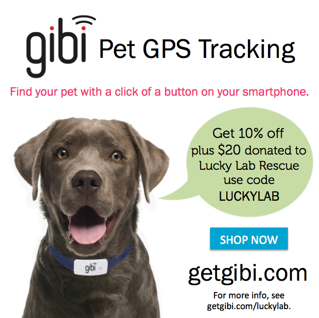 Find your Pet with a click of a Button! - To get 10% off a Gibi pet GPS tracker, use coupon code LUCKYLAB at the Gibi Online Store . Discount will apply to any ongoing sale price. For each Gibi tracker purchased, Gibi will donate $20 to Lucky Lab Rescue & Adoption .