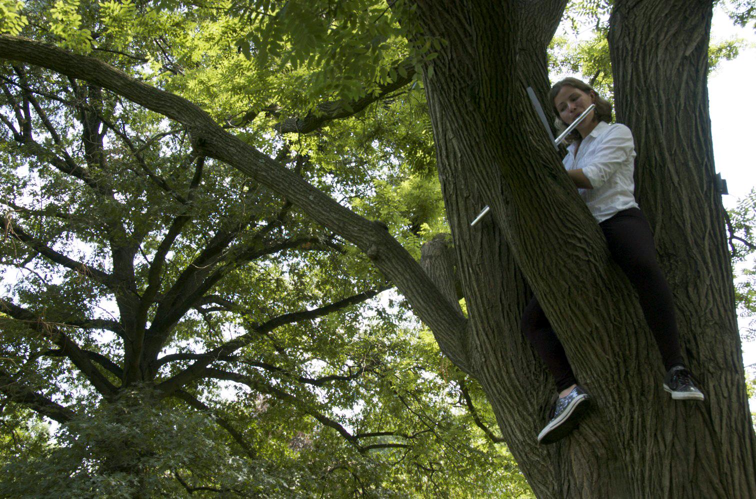kerrith-trees.jpg