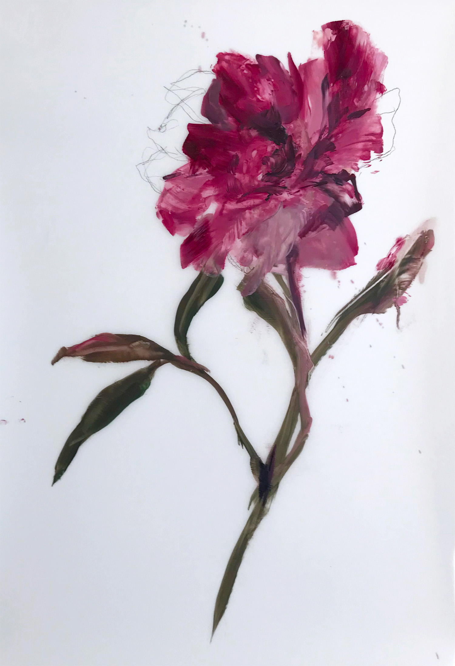 Madeleine Lamont, Single Pink Stem, oil on mylar, 36 x 24 in.