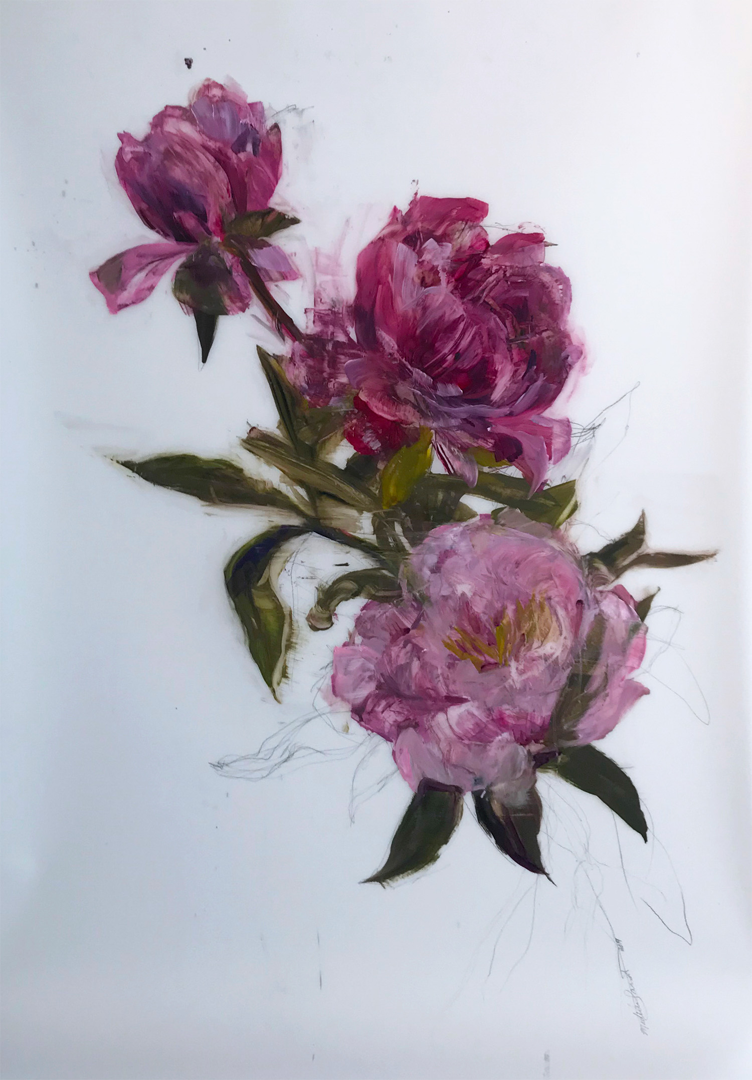 Madeleine Lamont, Three Pink Blooms, oil on mylar, 52 x 36 in.
