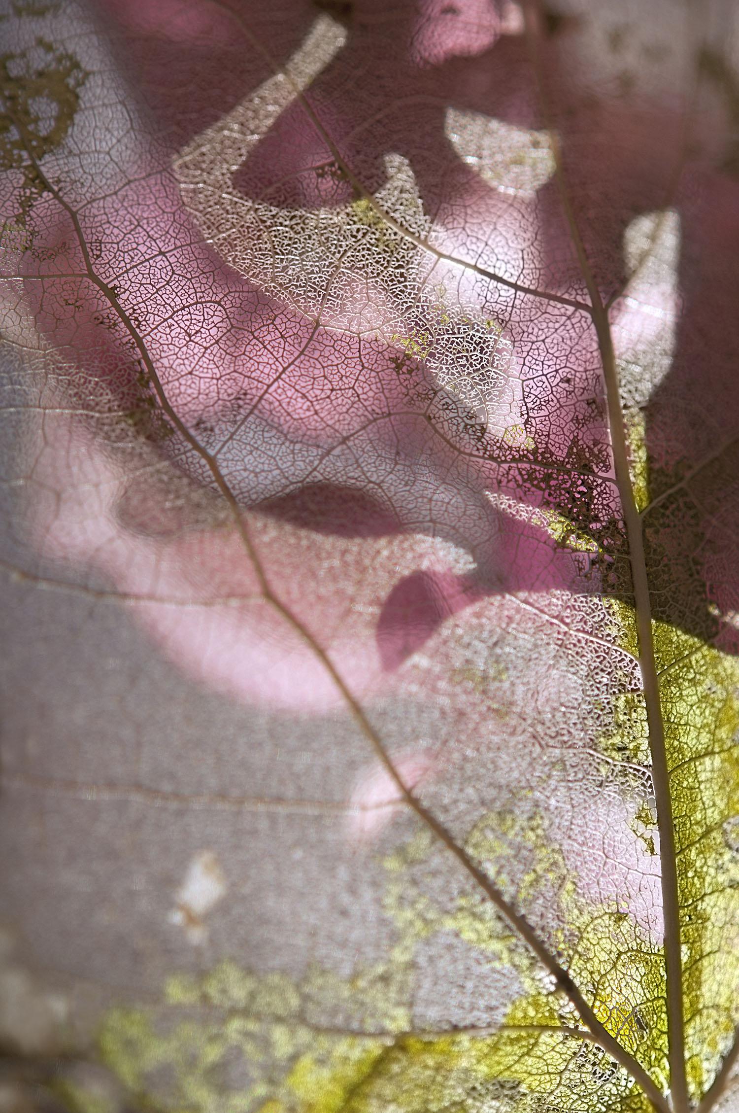 Anticipation, pigmented archival print