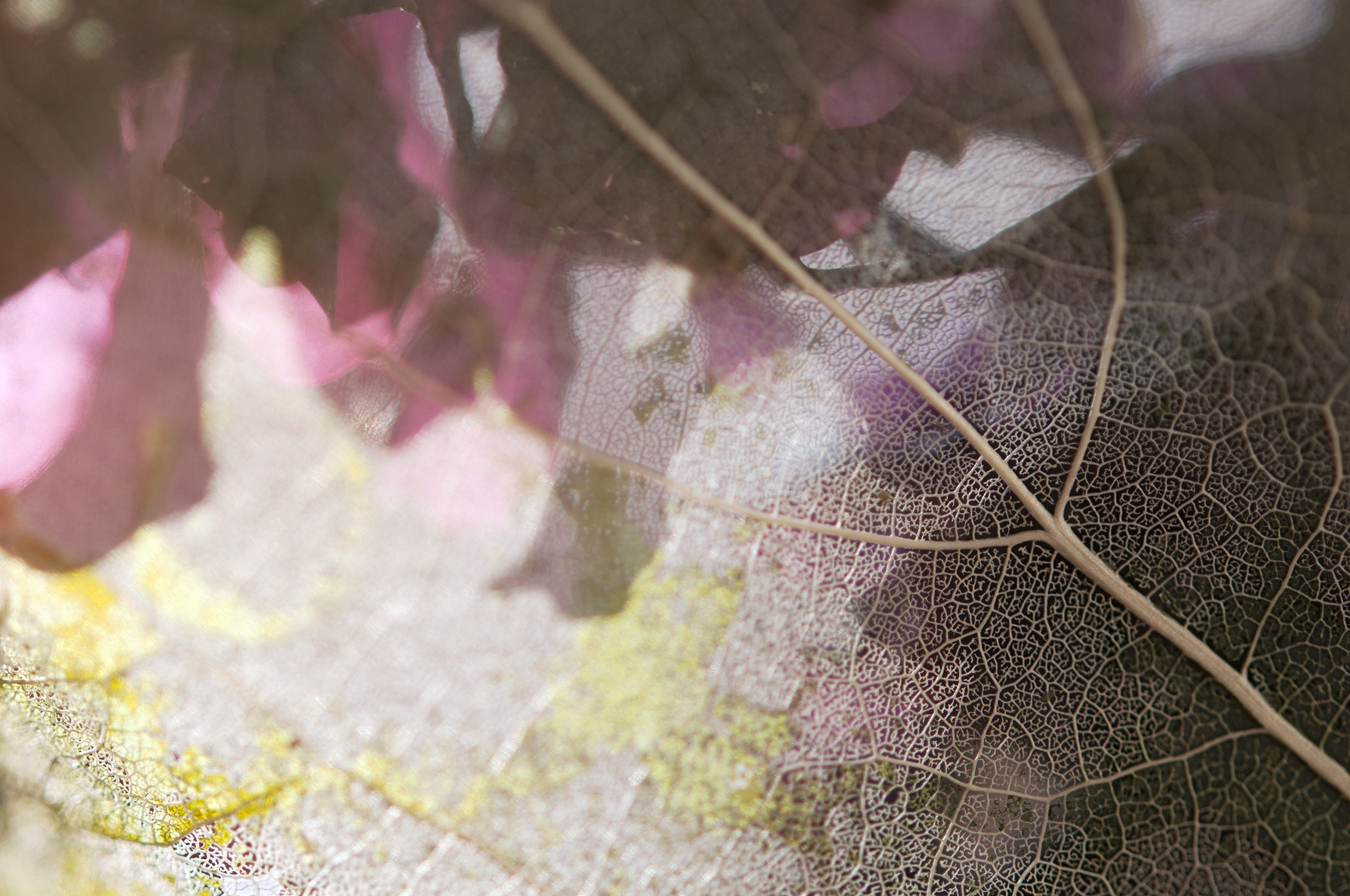 Dream Within a Dream, pigmented archival print