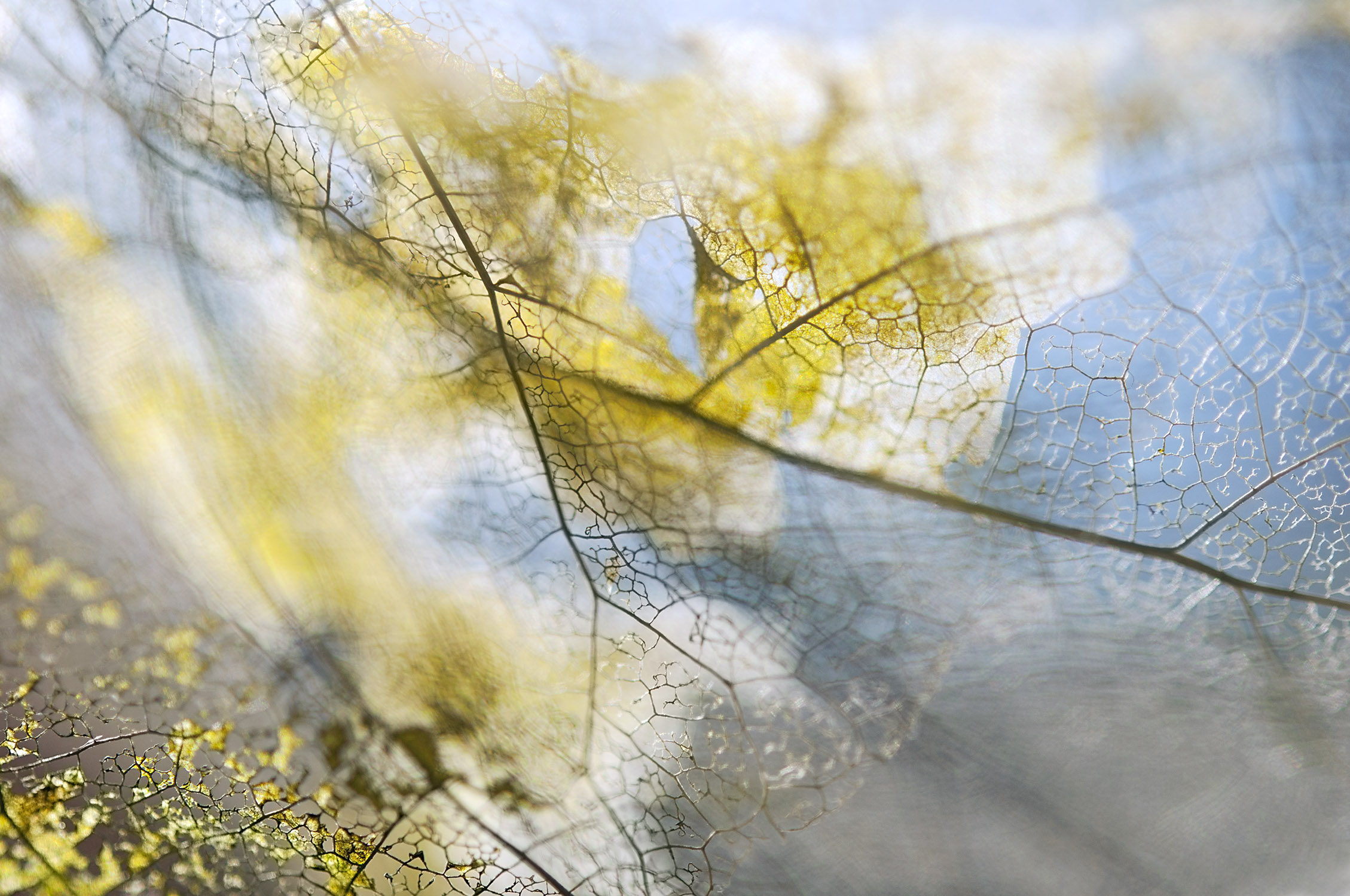 Fall on Me, pigmented archival print