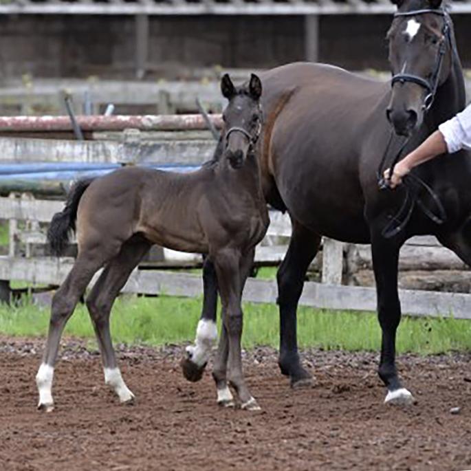 Foal1.jpg