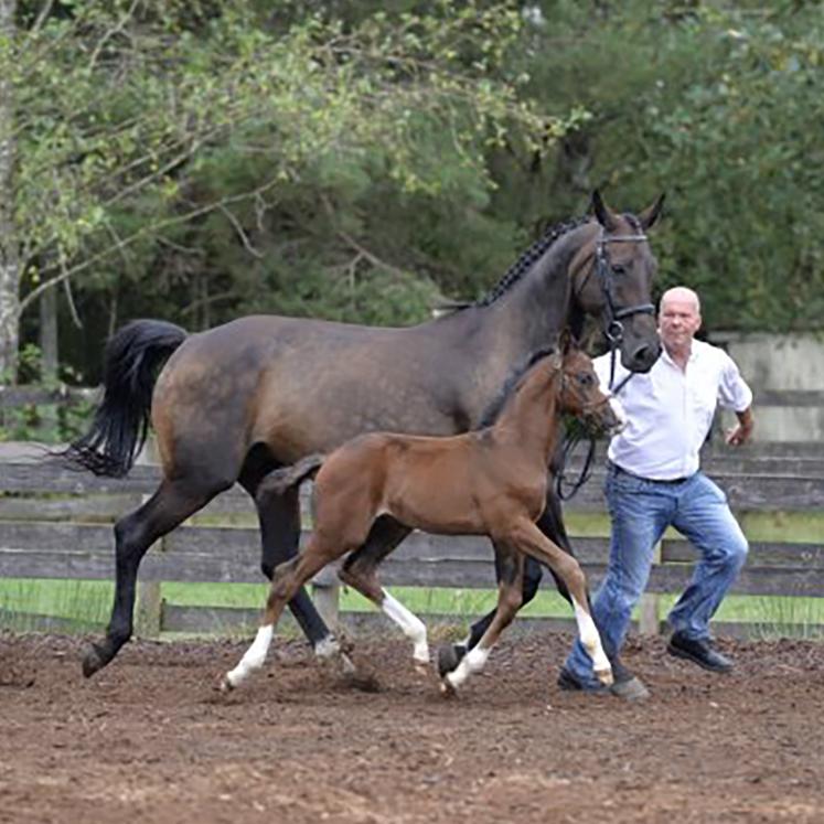 Foal2.jpg