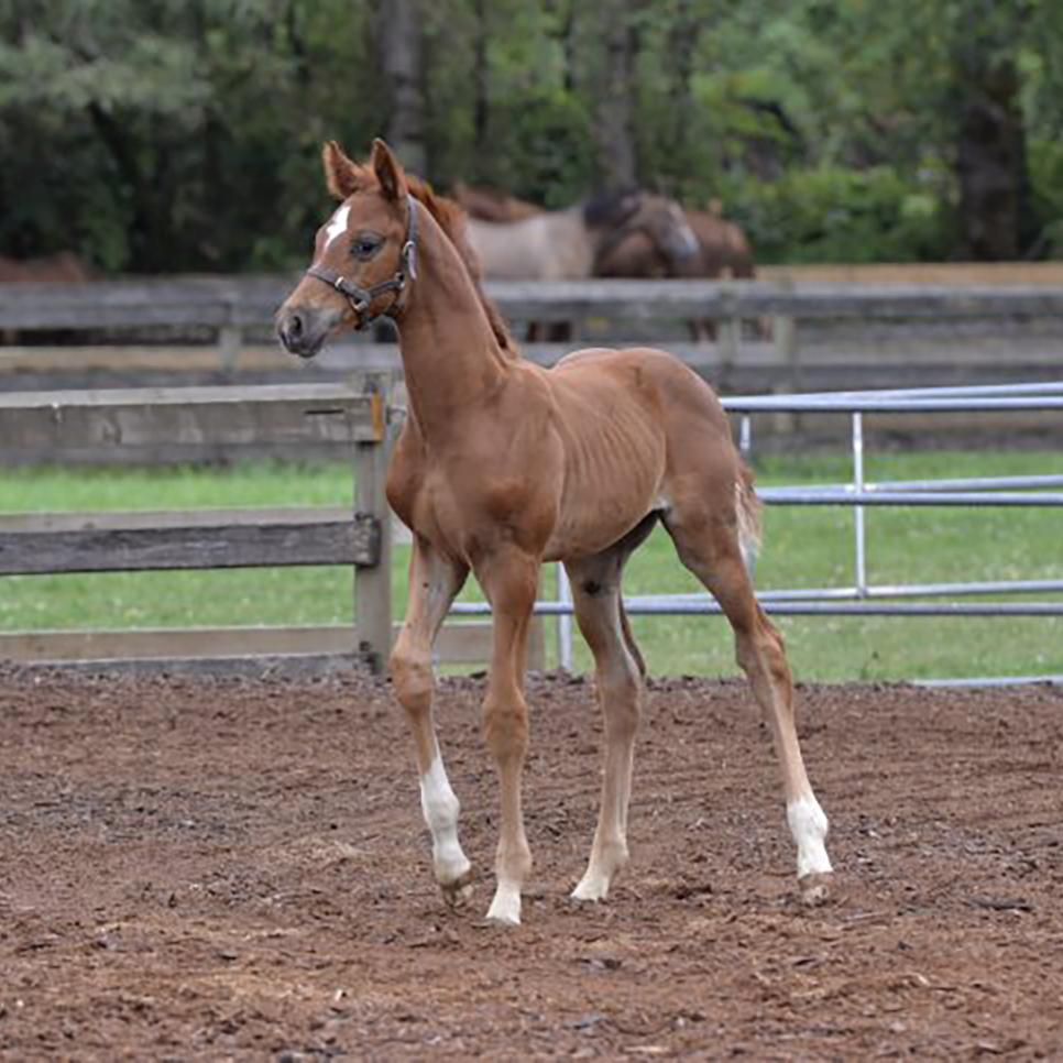 Foal4.jpg