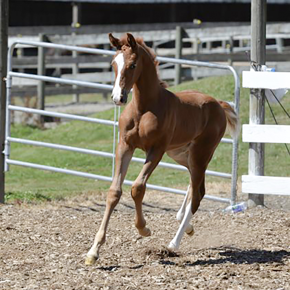 Foal6.jpg
