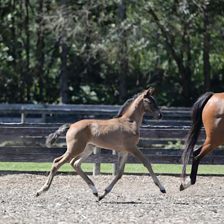 Foal7.jpg