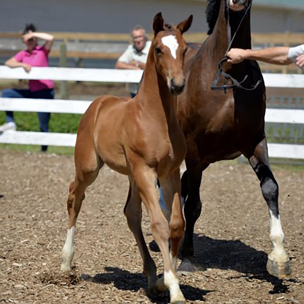 Foal8.jpg