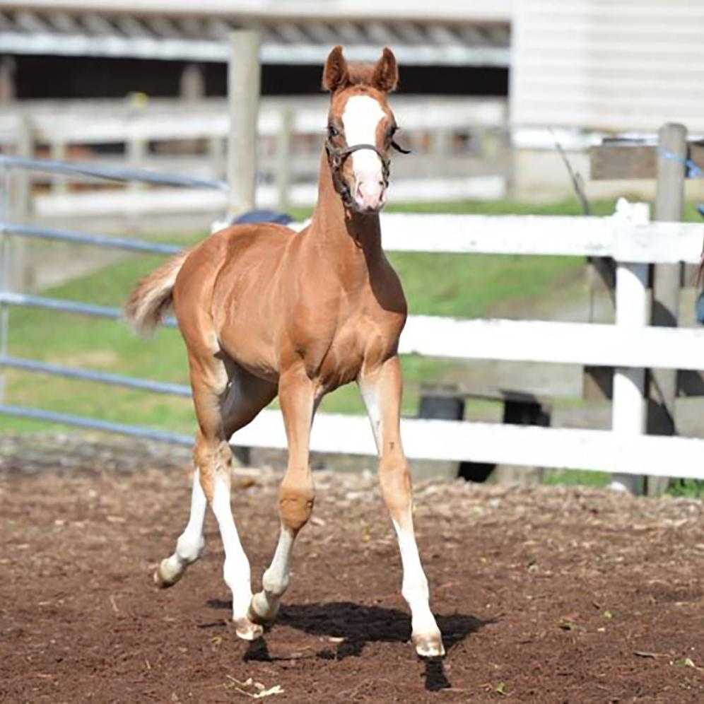 Foal11.jpg
