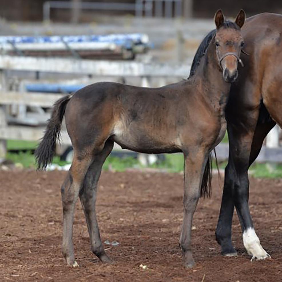 Foal12.jpg