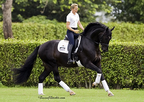 horsepage.jpg