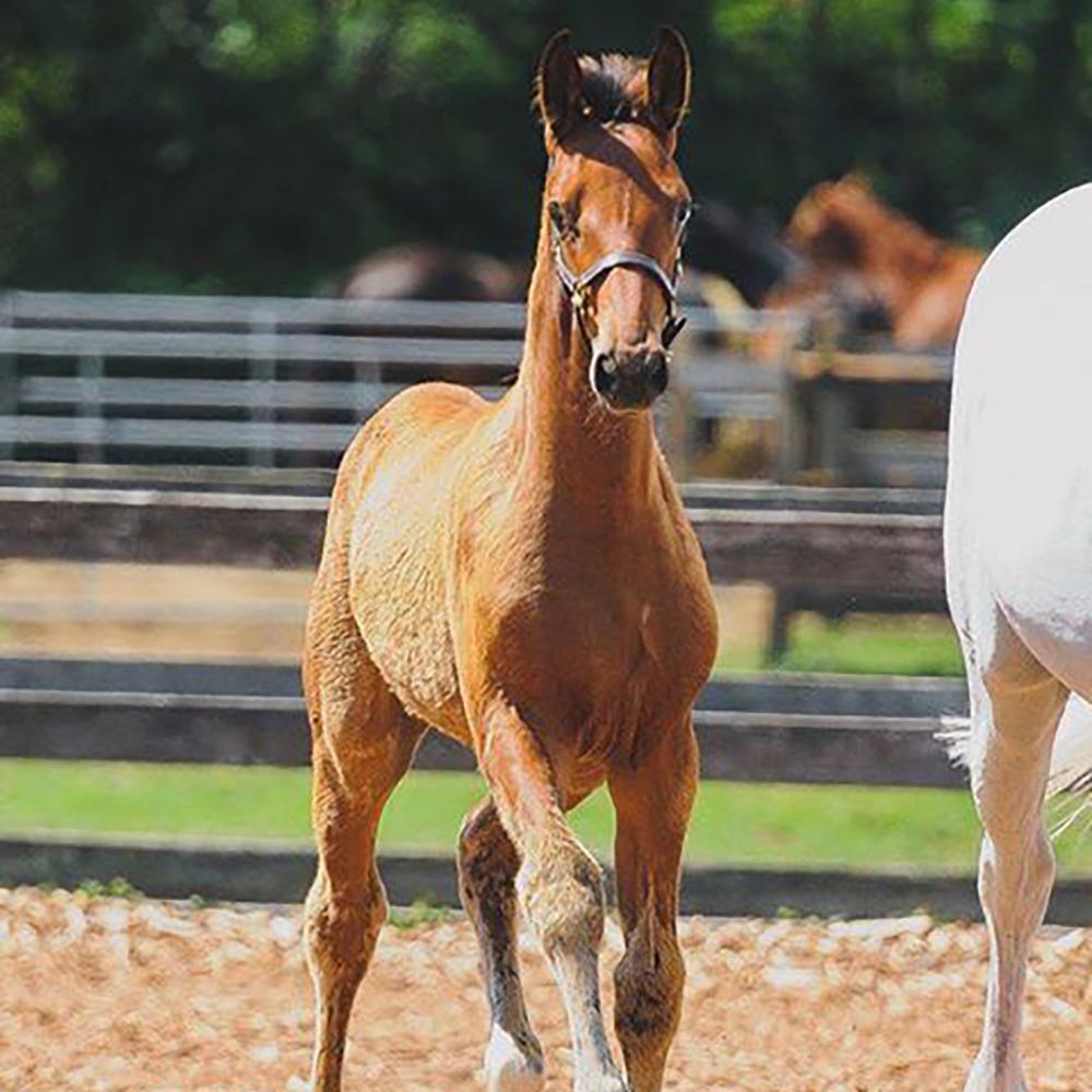 Foal13.jpg