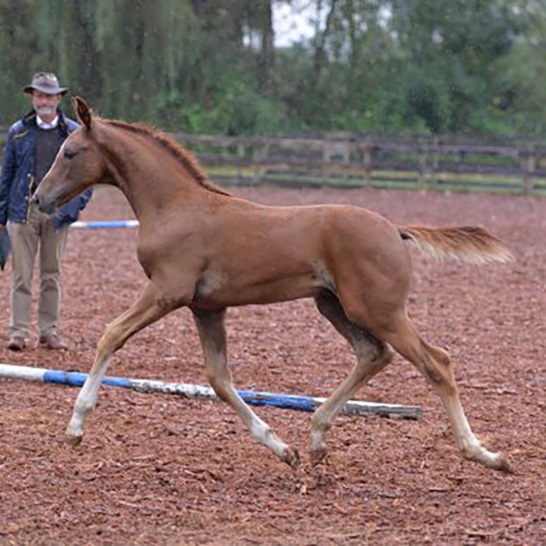 foal15.jpg