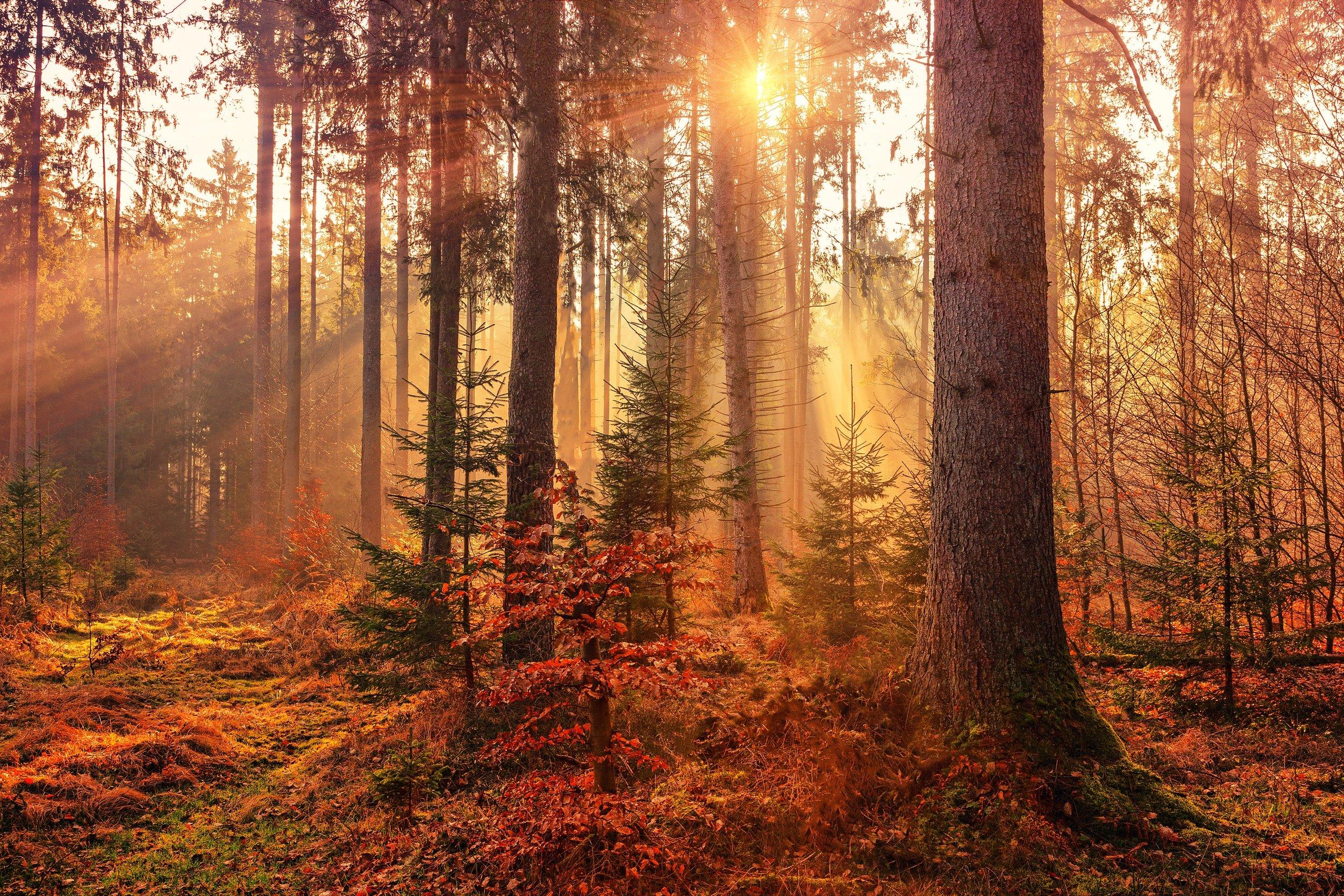 Glück ist Liebe, nichts anderes. Wer lieben kann, ist glücklich. - Hermann Hesse