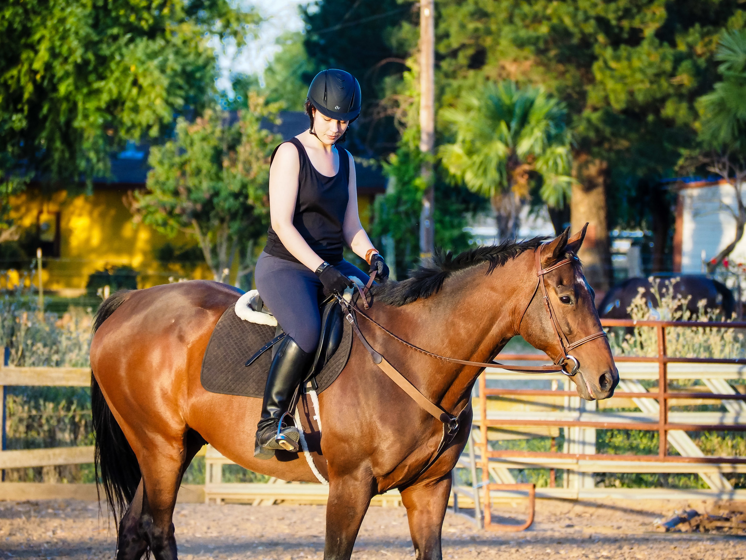 mikey-ottb-back-to-riding-2.jpg