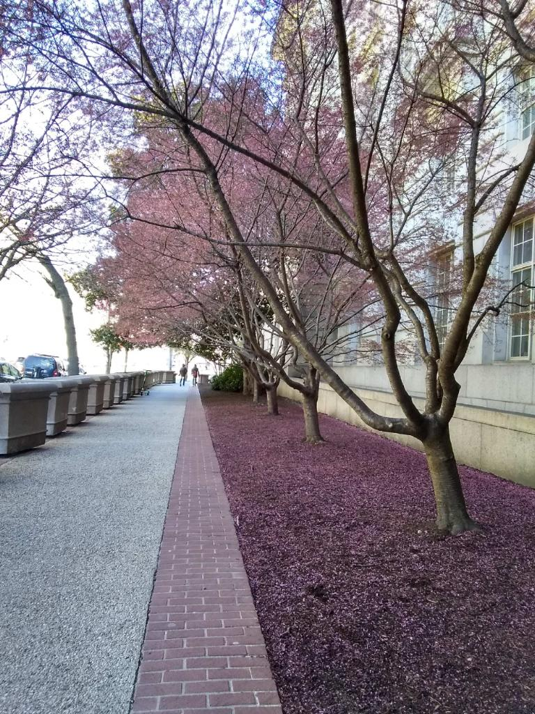 The National Cherry Blossom Festival is a weeklong cultural celebration that marks the arrival of spring in Washington. (Photo courtesy of Horus Alas)