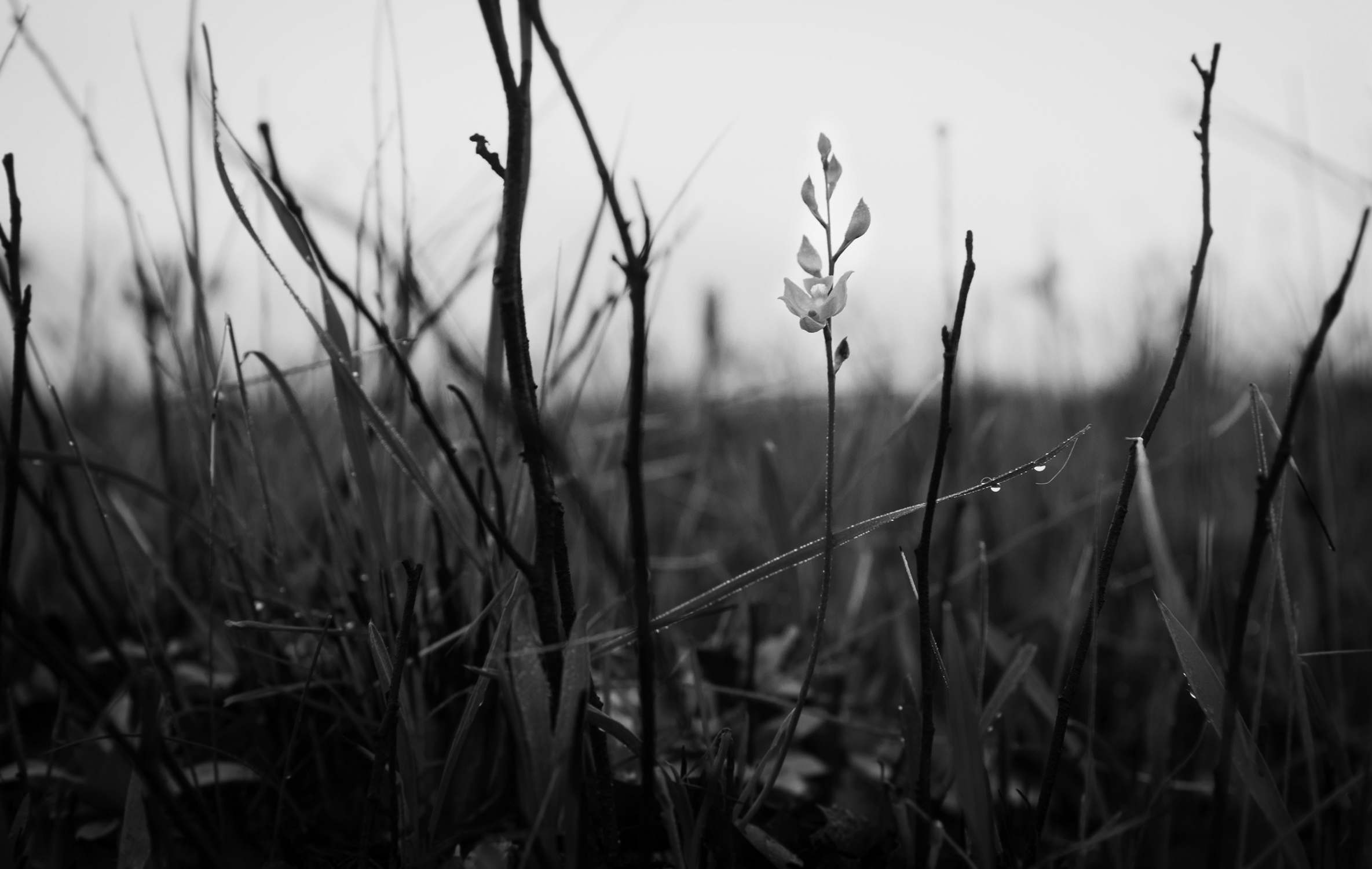 Just weeks after a prescribed fire at a Florida Grasshapper Sparrow site, green grass was growing and flowers blooming.
