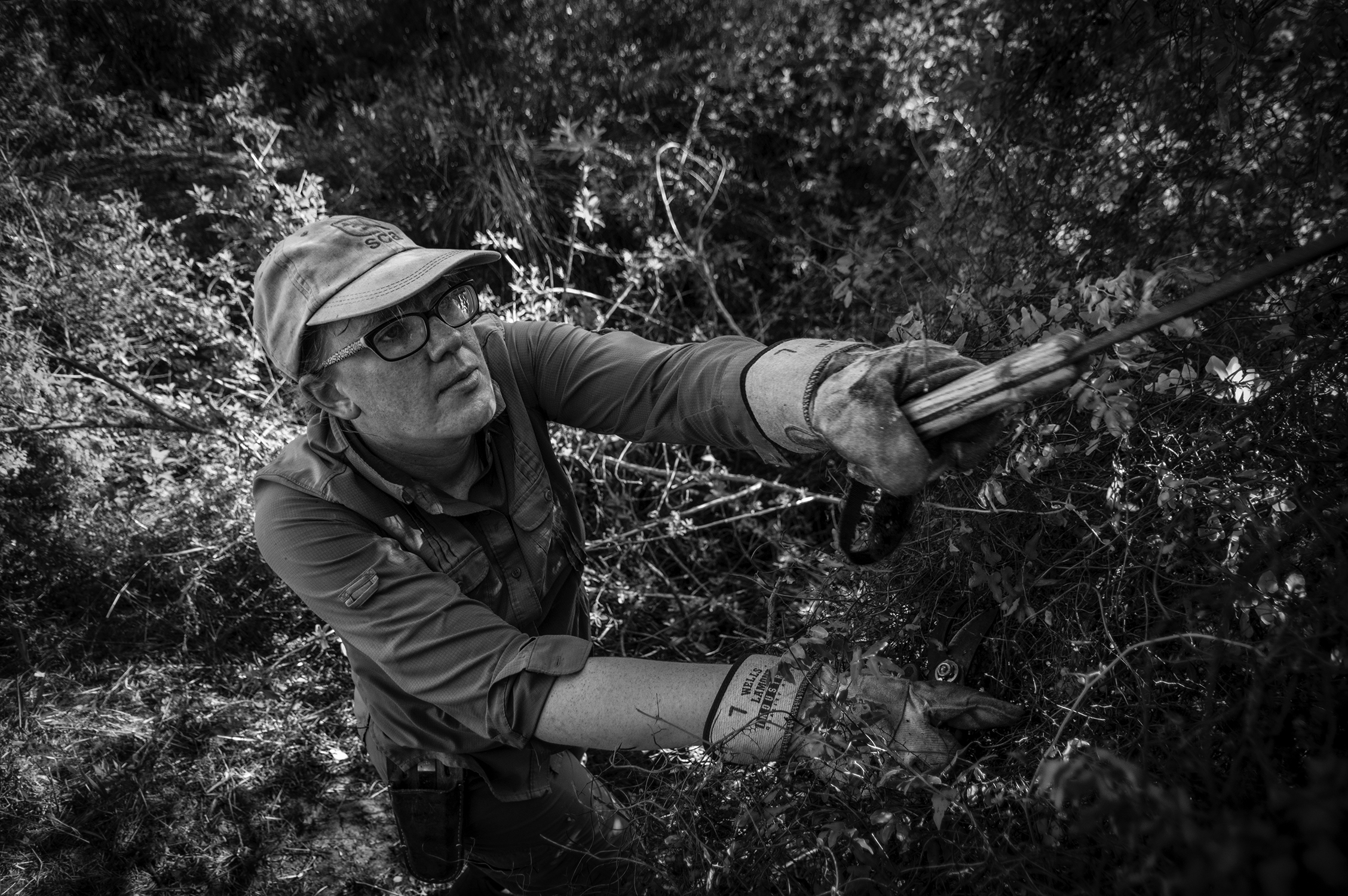 Biologists Lauren Elston removes the invasive Old World climbing fern ( Lygodium microphyllum ) from near a wetland. She uses herbicide, a machete, and her hands.