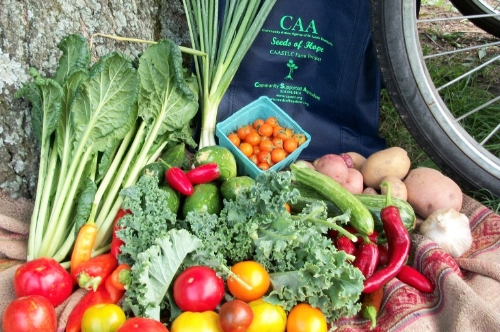 Seeds of Hope Farm -