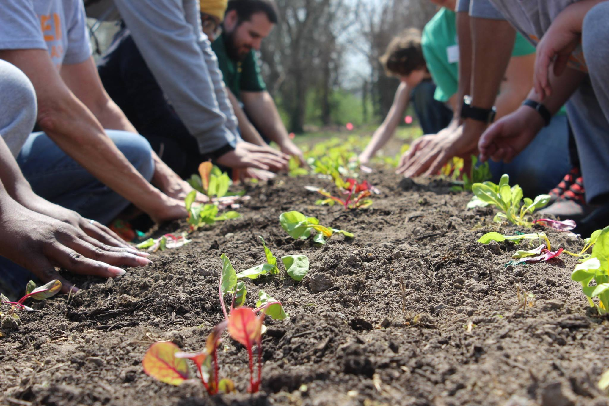 EarthDance Farms -