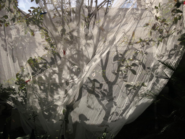 Wrapped-tree,-Glebe,-2014.jpg