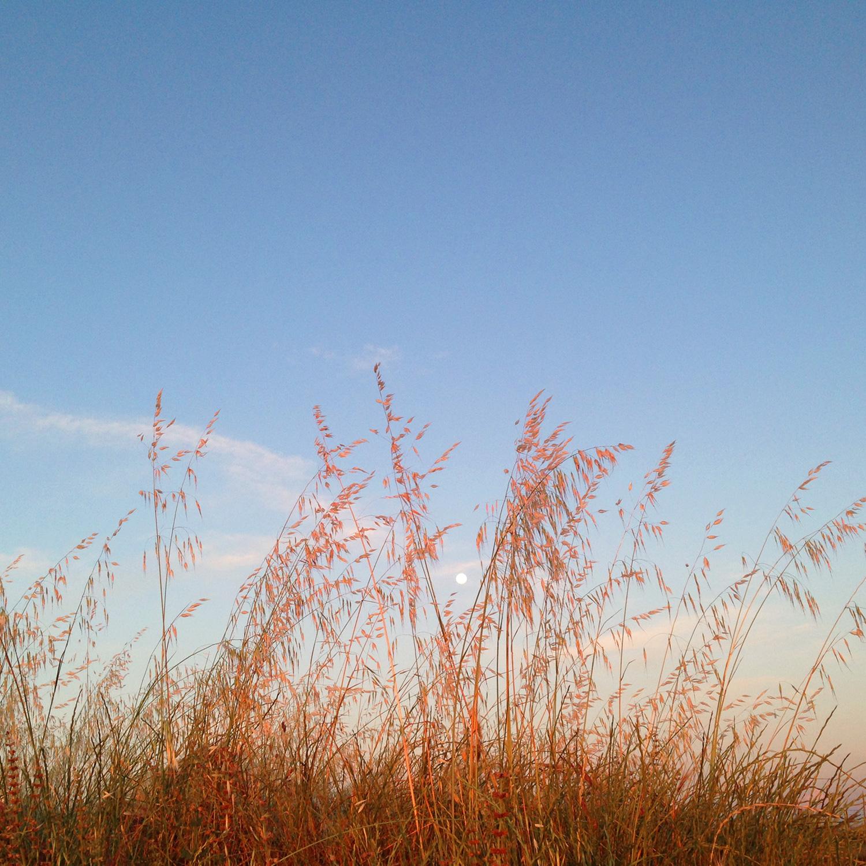 Moon-and-grass,-2015.jpg