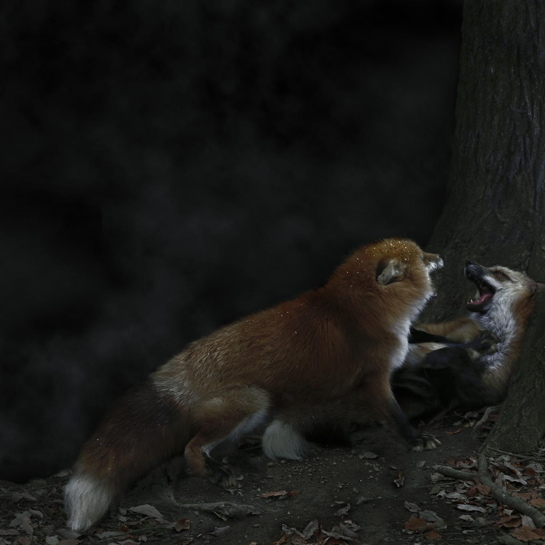 Foxfires / Kitsune-bi IV